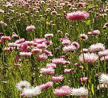 A Sea of Wild Flowers. by John Sharp