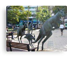 Kangaroos in downtown Perth, Western Australia Metal Print