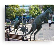 Kangaroos in downtown Perth, Western Australia Canvas Print