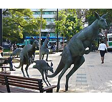 Kangaroos in downtown Perth, Western Australia Photographic Print