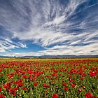 Papaver Bracteatum by Peter Daalder