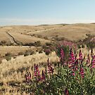 Gammon Ranges S.A by kirribas30
