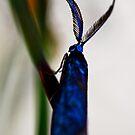 Desert Jewel by john  Lenagan