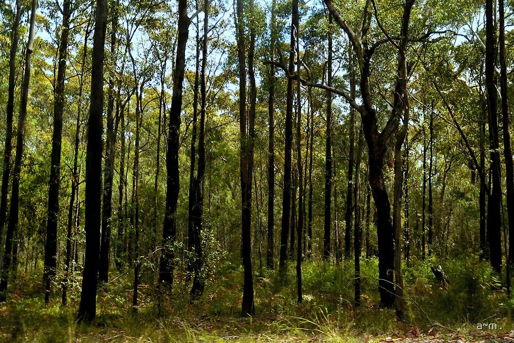 ~The Aussie Bush~ by a~m .