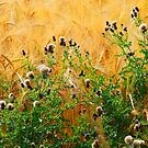 Thistles on wheat by clydeypops