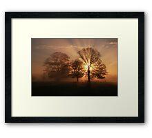 Tree Burst Framed Print