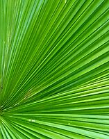 Fan Palm closeup by Linda Sparks