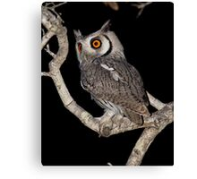 Southern White Faced Owl Canvas Print
