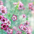 Wildflower by Fizzgig7