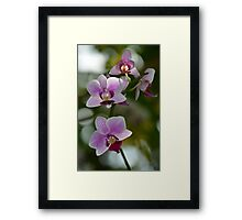 Purple and White Orchid Spray Framed Print