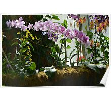 Colorful Orchid Garden Poster