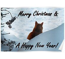 Best Cat´s Wishes!! Poster
