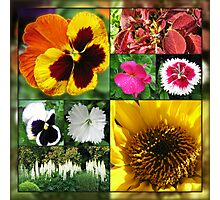Late Summer Flowers Collage Photographic Print