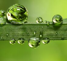 Gloriously Green by Sharon Johnstone