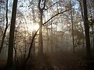 Morning Fog in the Forest by MotherNature