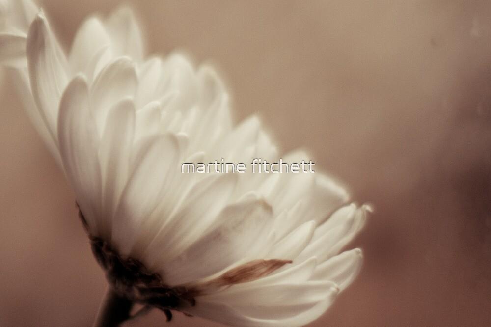 dusty daisy by martine fitchett