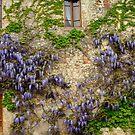 Villa by Harry Oldmeadow