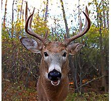 Wide-Angled Buck Photographic Print