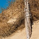 Landscape, Fence Posts, Desiccated, Sand dunes, by Hugh McKean