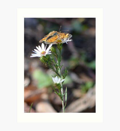 Little Orange Butterfly from Missouri Art Print