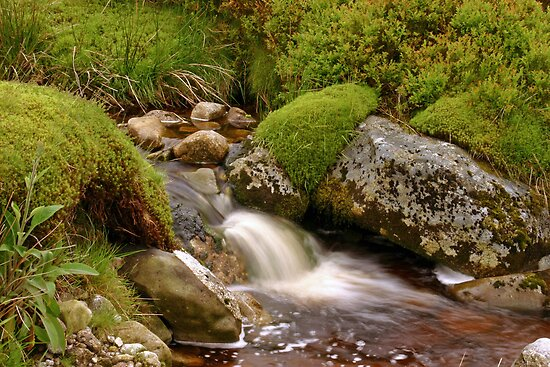 A Wicklow Stream by Martina Fagan