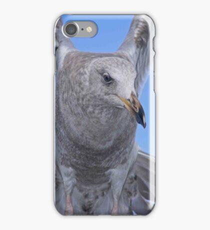 Seagull iPhone Case iPhone Case/Skin