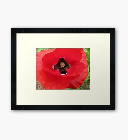Eleventh of the Eleventh Framed Print