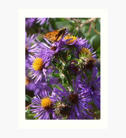 Moth Drinking Nectar from Purple Flower Art Print