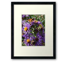 Moth Drinking Nectar from Purple Flower Framed Print