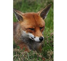 Sly fox Photographic Print
