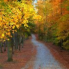 Leaves in the Lane by Chelei