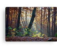 Views: 872 ★★★★★ . Have You Ever Seen the Paradise ?  God Bless Love of Life & Autumn Amen ! Dedicated to Love & Phil Collins - Another Day in Paradise. Пусть Бог не последний, СПАСИБО ! Canvas Print