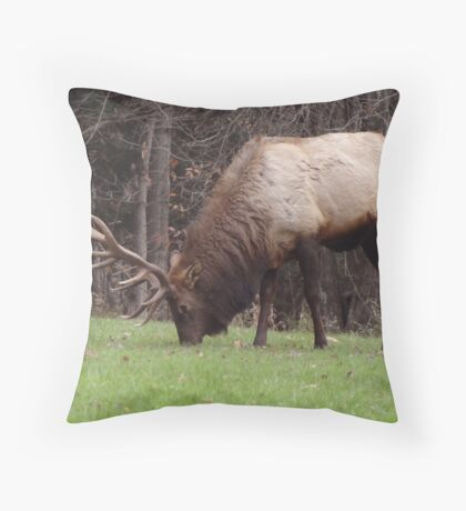 I could care less if you are staring at me Throw Pillow