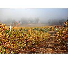 Autumn At Alkoomi Photographic Print