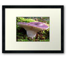 Purple Russula Framed Print