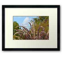 Beautiful Grass Framed Print