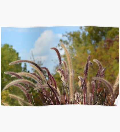 Beautiful Grass Poster