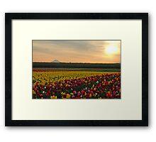 Tulips At Sunrise Framed Print