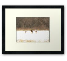 High tailing it out Framed Print