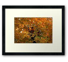 Boy in Tree Framed Print