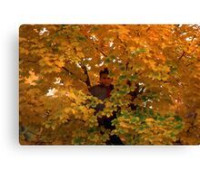 Boy in Tree Canvas Print