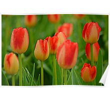 A Tapestry Of Tulips Poster