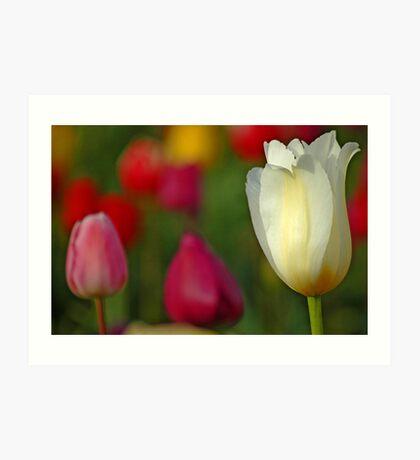 Tulipscape Art Print