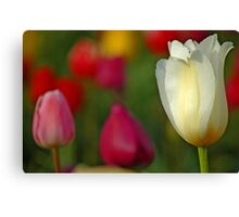Tulipscape Canvas Print