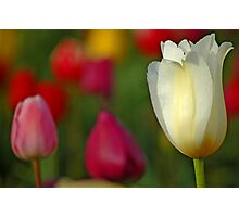 Tulipscape Photographic Print