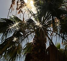 Palm Tree by evisonphoto
