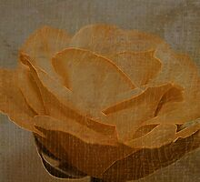 Yellow Rose In Full Bloom With Grunge by Sandra Foster