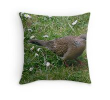 Malay Spotted Dove.......... Throw Pillow
