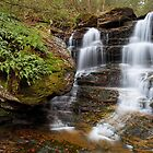 Late Autumn at Forgotten Falls by Tim Devine