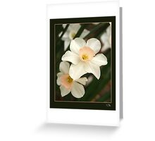 Small Daffodills in the Underbrush Greeting Card